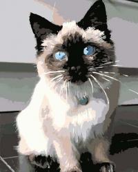Рисование по номерам (на холсте) 40х50 1044HS Котенок с голубыми глазами